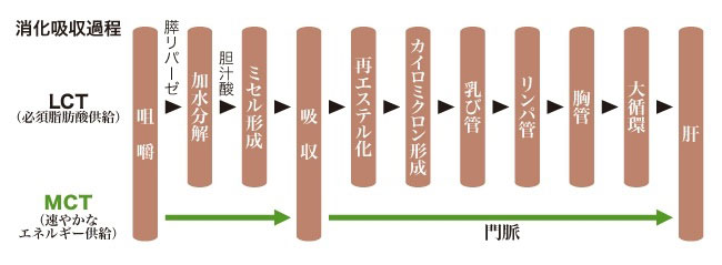 使用消化吸収過程.jpg
