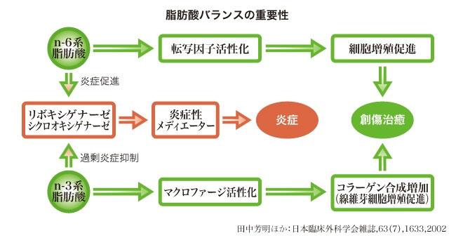 使用脂肪酸バランスの重要性.jpg