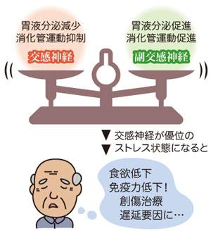 使用自律神経のバランス.jpg