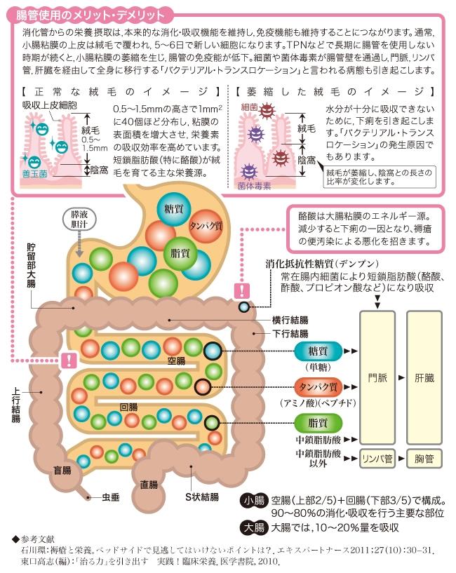 栄養素の消化吸収(1).JPG