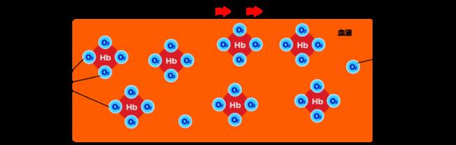 hemogrobin3.png