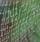 正方形;蜘蛛の糸写真.jpgのサムネイル画像のサムネイル画像のサムネイル画像
