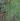 正方形;蜘蛛の糸写真.jpgのサムネイル画像のサムネイル画像のサムネイル画像のサムネイル画像
