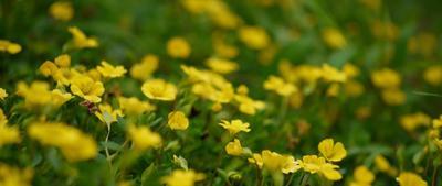 花の写真.jpeg